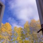Zlaté osiky za oknem