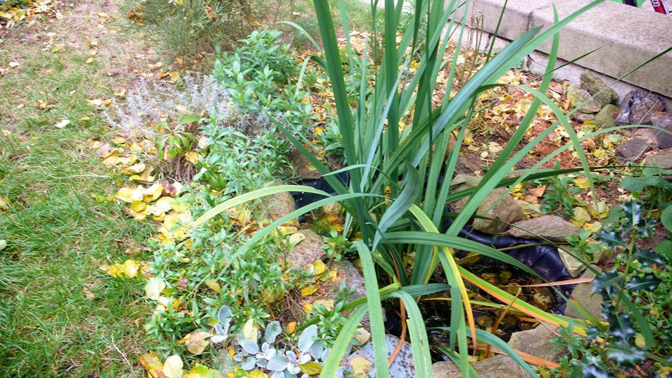 Malé zahradní jezírko | přírodní zahrada Evy Hauserové, Praha